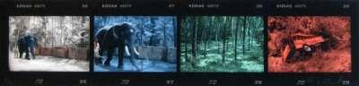 Blue Elephant (Tirage pigmentaire) - Elizabeth LENNARD